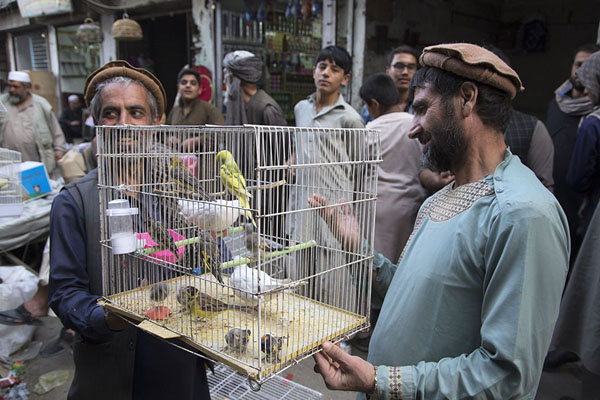 Men showing a cage with bird to passers-by | Ka Faroshi Market | Afghanistan