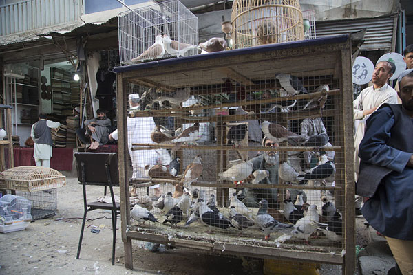 Cage with pigeons at the bird market | Ka Faroshi Market | Afghanistan