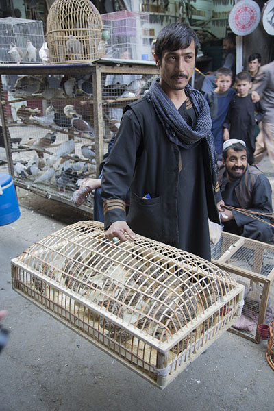 Picture of Man with a flat cage at the bird marketKabul - Afghanistan