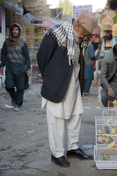 Old Afghani man inspecting a cage with birds | Ka Faroshi Market | 阿富汗