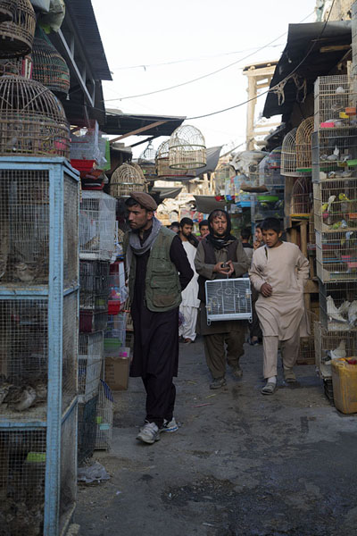 Picture of Man walking with cage in Ka Faroshi market