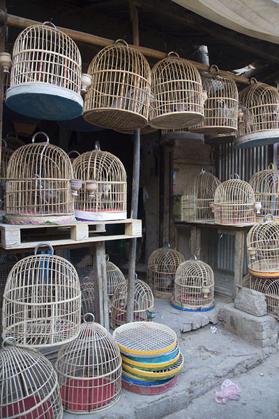 Empty cages waiting for birds a the market | Ka Faroshi Market | Afghanistan