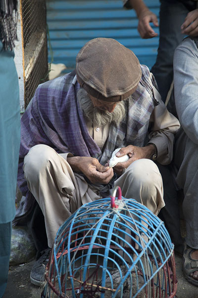 Foto van Old men inspecting a white bird at the bird marketKaboel - Afghanistan