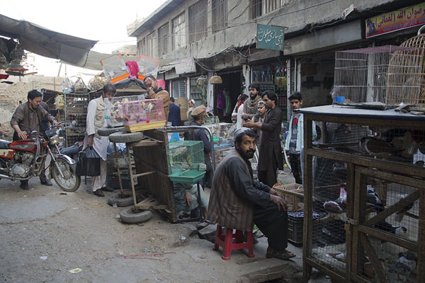 Picture of Street with Afghans selling birdsKabul - Afghanistan