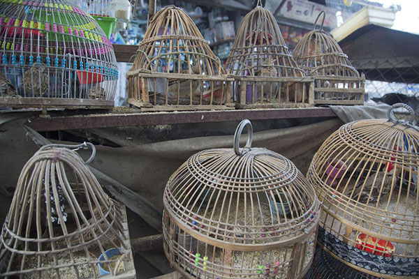 Picture of Birds in cages at Ka Faroshi market waiting for a buyer
