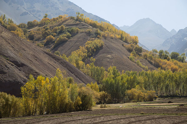 Picture of Qazan Valley (Afghanistan): Lines of trees in Qazan valley