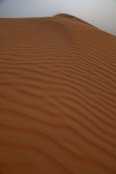 Picture of Patterns of wind on a sand dune in the Sahara