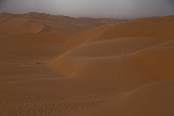 Looking out over sand dunes | Sebkha Circuit | Algeria