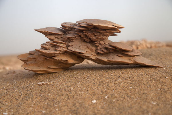 Desert rose on the hard surface of the plains at the foot of the Grand Erg Occidental | Sebkha Circuit | Algeria