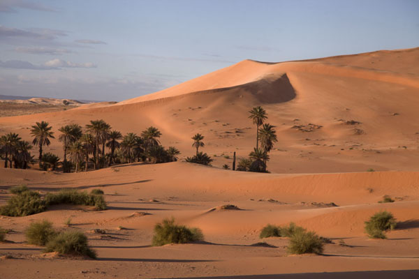 Picture of Sand dunes and palm trees in the end of the afternoonTaghit - Algeria
