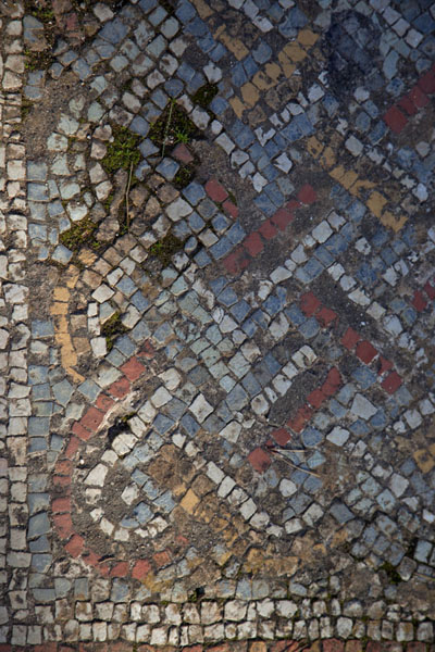 Fragment of colourful mosaic on the floor of the Great Christian Basilica | Tipaza | Algeria
