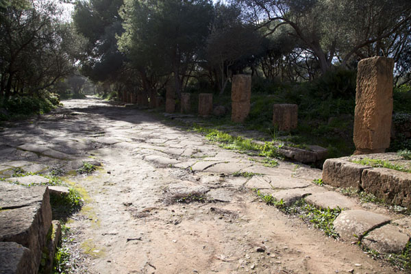 The Decumanus Maximus towards the Nymphaeum | Tipaza | Algeria