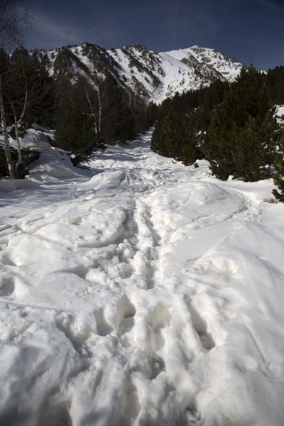 Picture of Tracks on a snowy trail leading to Pla de l'EstanyPla de l'Estany - Andorra