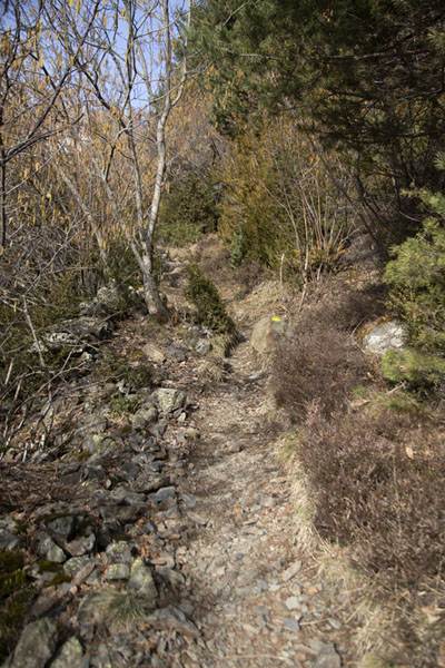 Picture of Mountain trail at lower altitude on the Andorran mountainsPla de l'Estany - Andorra