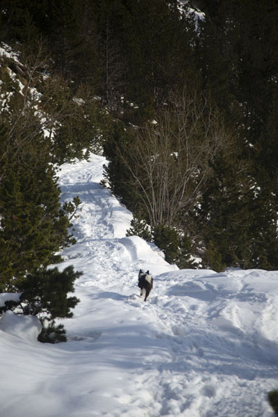 Picture of Pla de l'Estany (Andorra): Trail covered in snow on the slopes of Pla de l'Estany