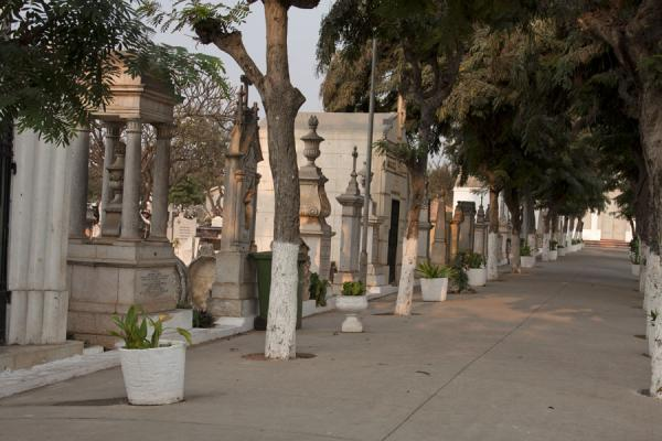 Lane with trees at the cemetery of Alto das Cruzes | Alto das Cruzes cemetery | Angola