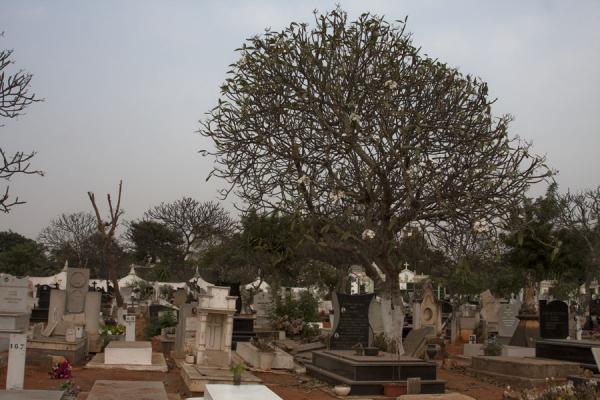 Picture of Alto das Cruzes cemetery (Angola): Tombstones and tree at the Cemitério de Alto das Cruzes