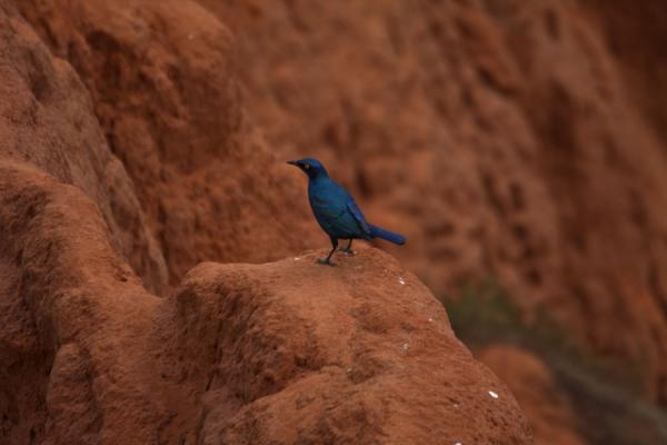 Bird on the red cliffs | Miradouro da Lua | Angola