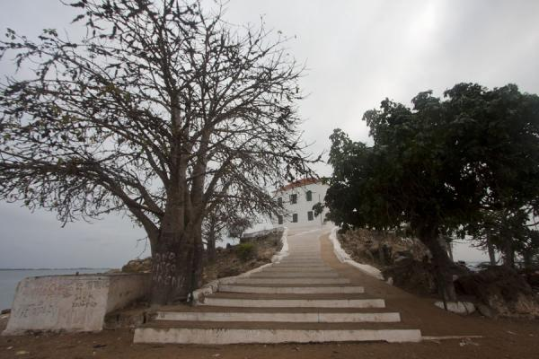 Picture of Baobab and stairs leading up to the Museum of SlaveryMorro da Cruz - Angola