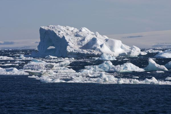 Picture of Antarctic Sound (Antarctica): Icebergs in the Antarctic Sound