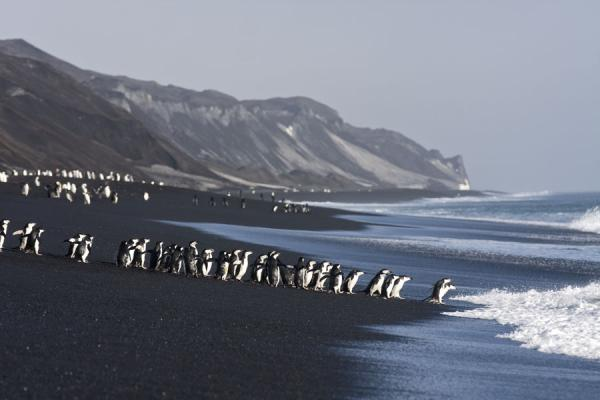 Black sand beach at Baily Head with chinstrap penguins about to go for a swim | Baily Head | Antarctica