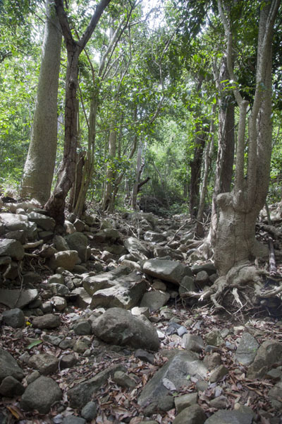 Foto van Rocky trail through the woods on Mount ObamaMount Obama - Antigua en Barbuda