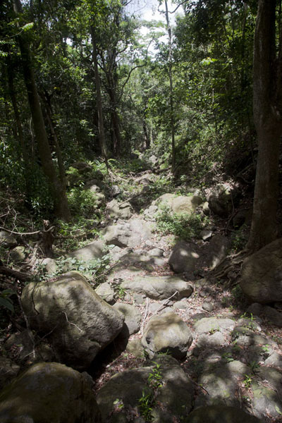The dry riverbed through which I descended Mount Obama | Mount Obama | Antigua y Barbuda