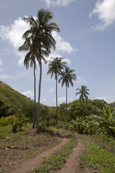 Foto van Track in the valley on the north side of Mount ObamaMount Obama - Antigua en Barbuda