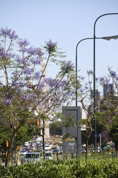 Picture of Avenida 9 de julio (Argentina): Ingredients of Avenida 9 de Julio: cars, trees, flowers, and the obelisk