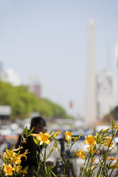 Picture of Avenida 9 de julio (Argentina): Obelisk and traffic with flowers in the foreground on Avenida 9 de Julio