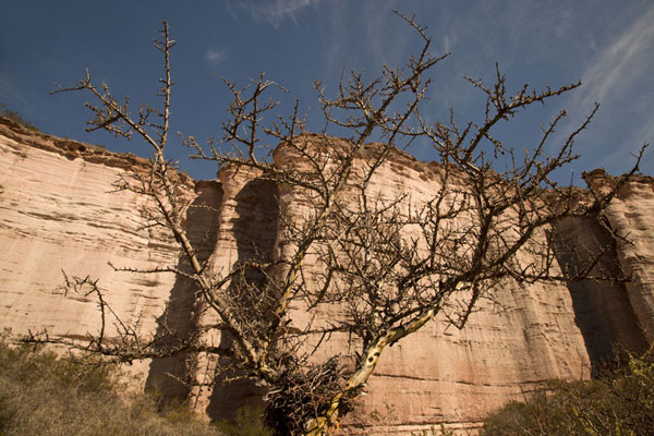Endemic tree in front of wave-shaped cliffs of El Chiflón | El Chiflón | Argentina