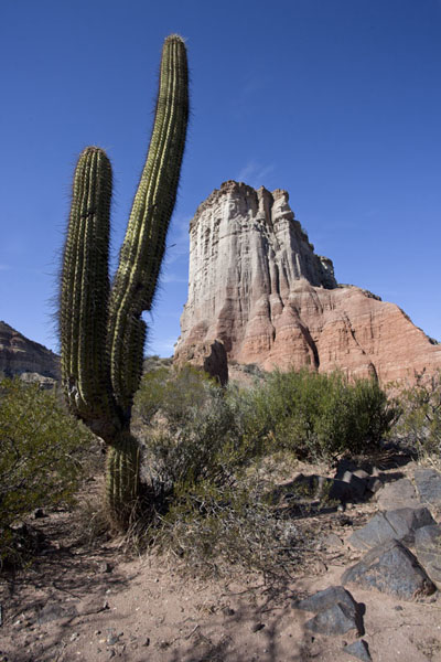 Picture of El Chiflón (Argentina): Tall cactus with steep cliffs in the background are typical El Chiflón scenery