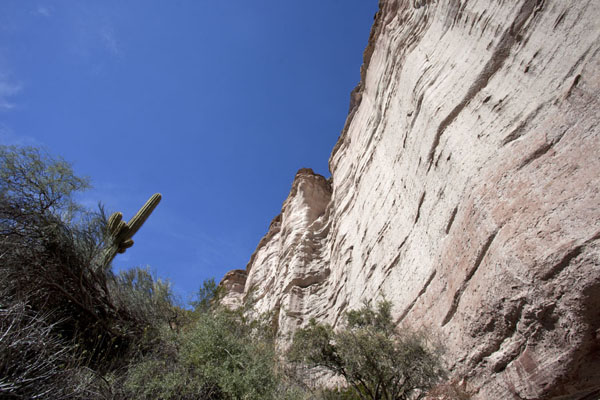 Picture of El Chiflón (Argentina): Cliffs and cactuses in El Chiflón