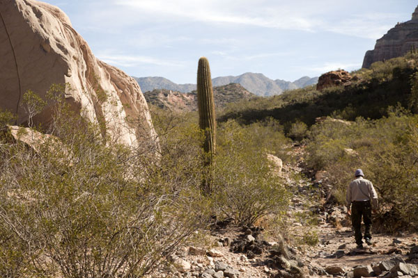 Picture of El Chiflón (Argentina): Walking past a tall cactus in the valley of El Chiflón