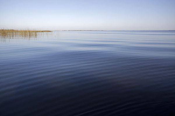 Picture of The quiet waters of the Laguna del IberáEsteros del Iberá - Argentina