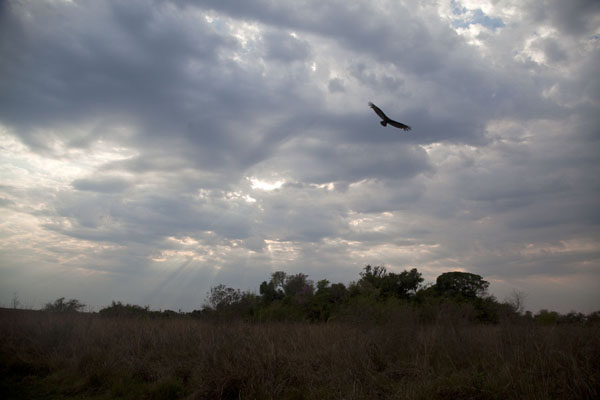 Photo de Clouds in the morning over the wetlands of Iberá - l'Argentine - Amérique