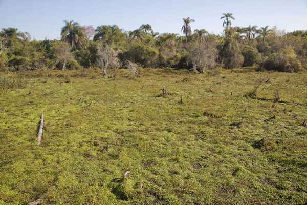 View of typical landscape of the Estero del Iberá | Iberá Wetlands | 阿根廷