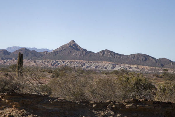 Picture of The landscape of the park with mountains and some small vegetationParque Ischigualasto - Argentina