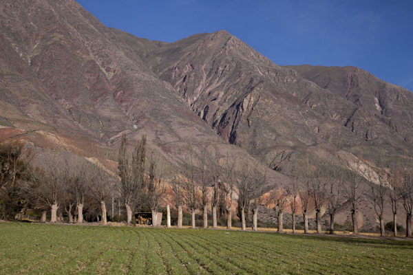 Mountainous landscape with trees at the southside of Quebrada de Humahuaca | Quebrada de Humahuaca | Argentina