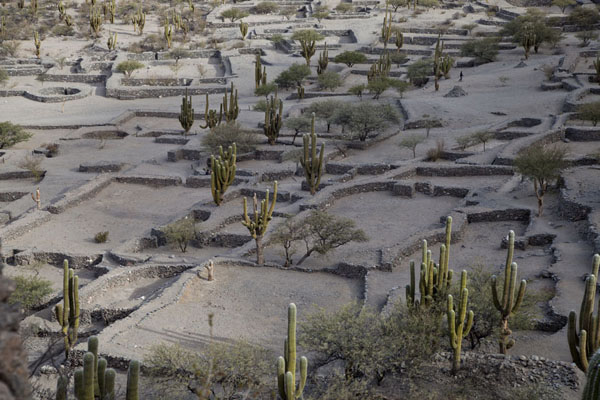 The foundations of dwellings of the Diaguitan city of Quilmes | Rovine di Quilmes | Argentina