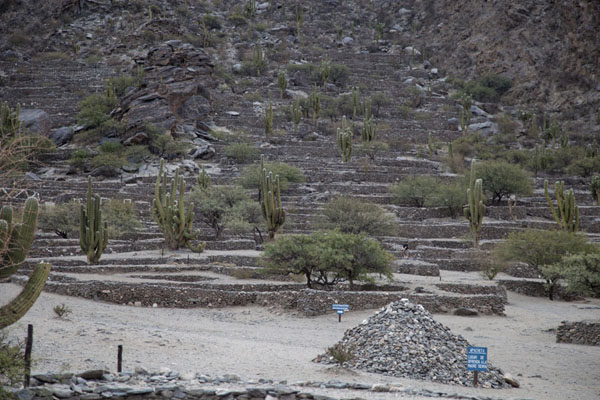 Apacheta, the site of offerings to Mother Earth, with the ruins of Quilmes in the background | Quilmes Ruins | Argentina