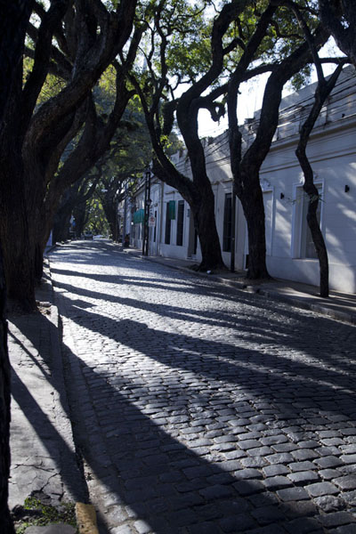Cobblestone street with trees in San Isidro | San Isidro Historic Town | Argentina