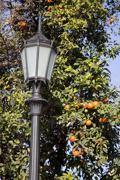 Picture of San Isidro Historic Town (Argentina): Orange tree with street lantern in close-up
