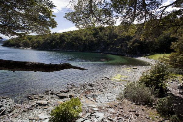 Picture of Small beach protected by woods at Bahía LapataiaTierra del Fuego - Argentina