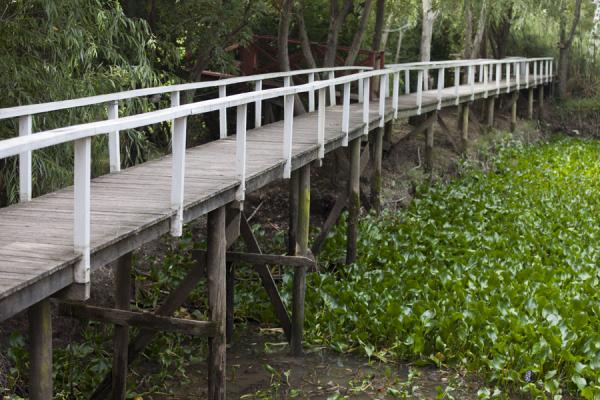 Picture of Tigre Paraná Delta (Argentina): Wooden boardwalk in the Paraná delta area near Tres Bocas