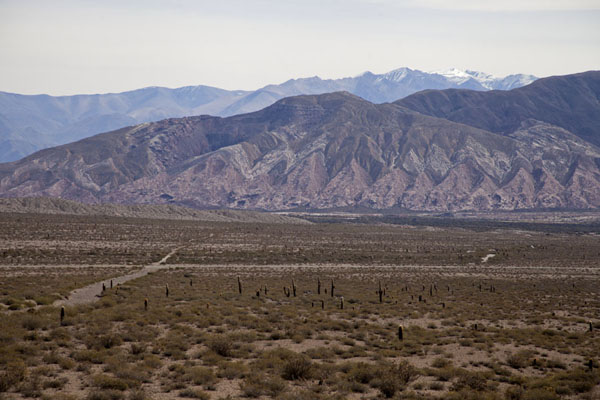 The Recta del Tin-Tin with candelabra cacti and snow-capped mountains in the background | Valles Calchaquies | Argentina