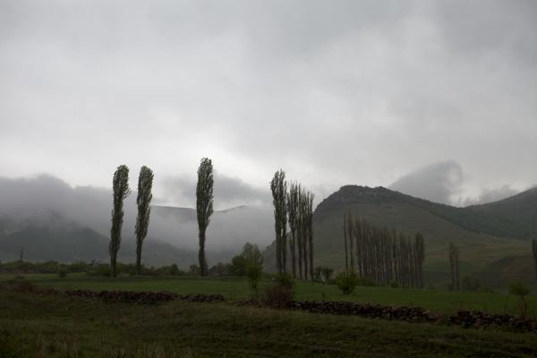 Picture of Ardvi (Armenia): View between the main road and Ardvi with poplars and clouds