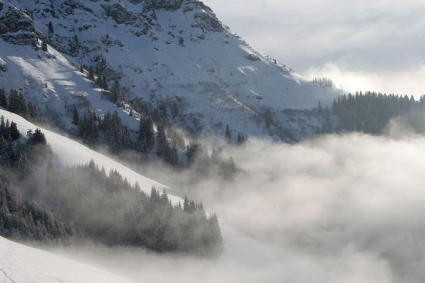 的照片 奥地利 (Snow-covered trees enveloped by clouds on the slopes of St. Johann)