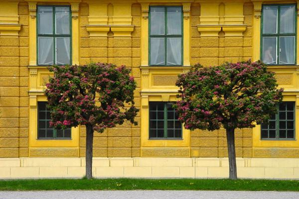 Blossoming trees in front of one of the Schönbrunn Palace walls | Schönbrunn Palace | Austria