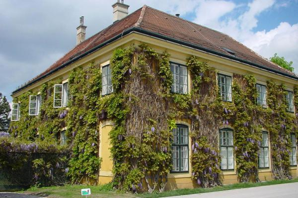 Wistaria growing all around this house in the park | Schönbrunn Palace | Austria